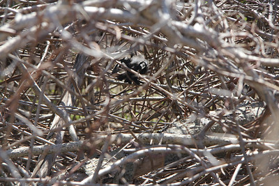 Jamicabay bird refuge