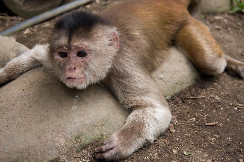 monkey-rescue-centre_4890759742_o.jpg