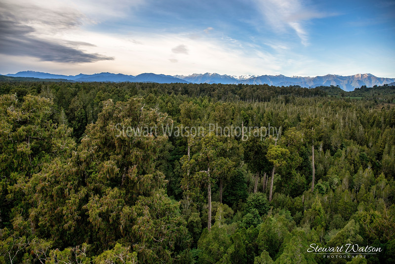 West Coast Tree Walk views Hokitika