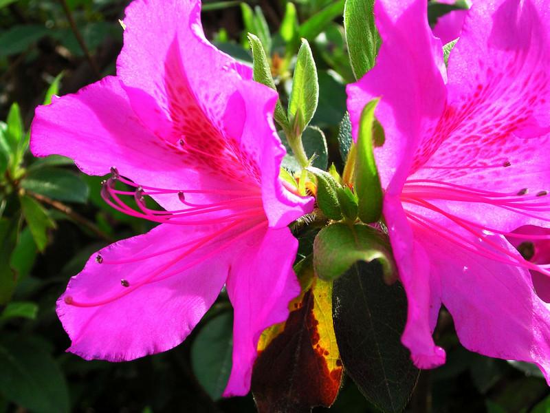 carolina flower 066.jpg