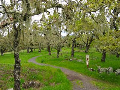 Sonoma County California trees & plants