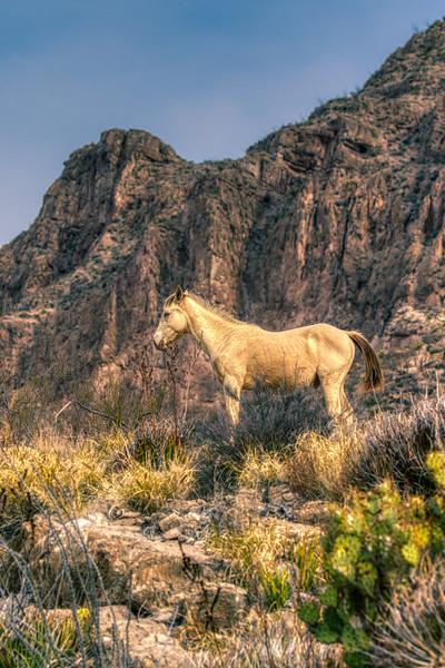 Wild Horse Big Bend NP 2020-3.jpg