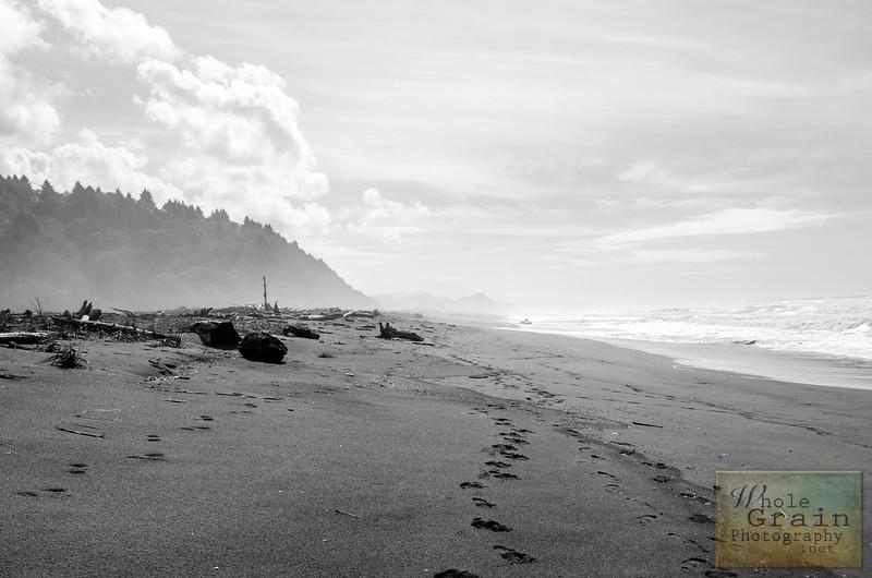 20141015_Redwoods_0083.jpg