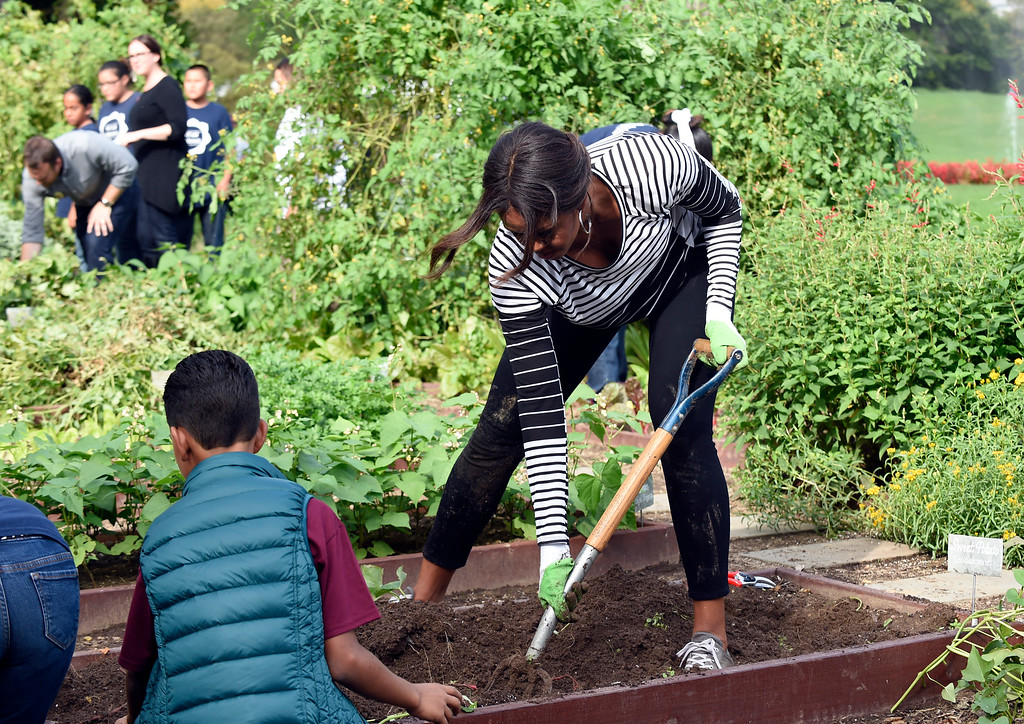 . First lady Michelle Obama is joined by school children as they harvest sweet potatoes in the annual fall harvest of the White House Kitchen Garden at the White House in Washington, Tuesday, Oct. 14, 2014. (AP Photo/Susan Walsh)