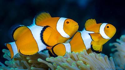 Halmahera Sea