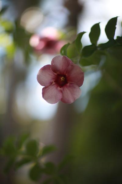 Kauai_D5_AM 083.jpg