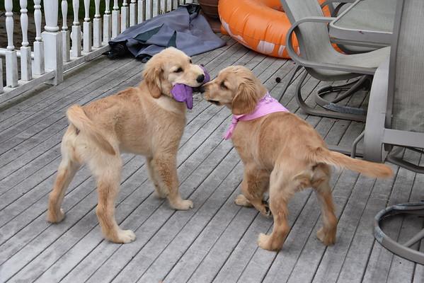 Kayla & Piper - May 16, 2015