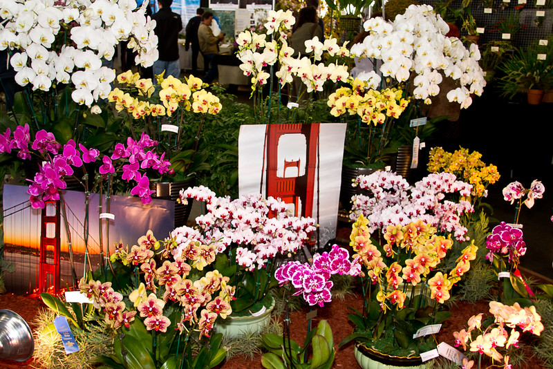 SF_Orchid_Show-02.jpg