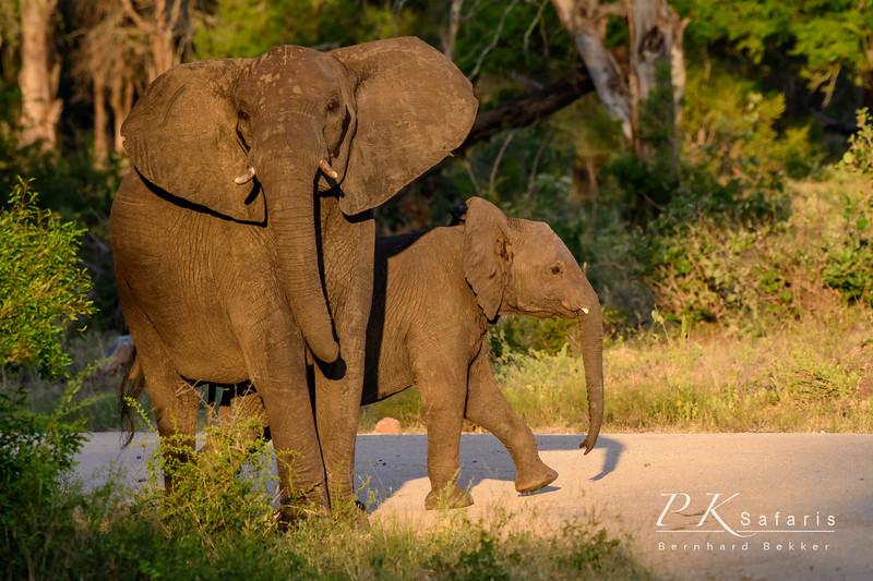Elephant cow and calf (1 of 1).jpg