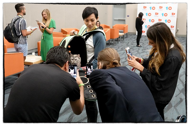 The co-owner of Nala_cat, the most popular feline on Instagram, brings the cat to the VidCon press room to pose for selfies.