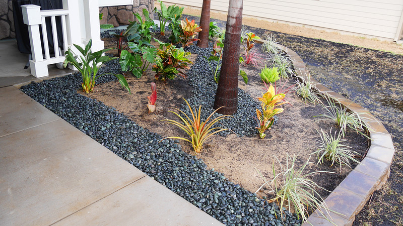 Front planter showing Aztec grass, Asparagus fern, Red Star, Ornamental Pineapple, Croton, Bird of Paradise, Heliconia, Canna,  Monstera, Philodendron and more.