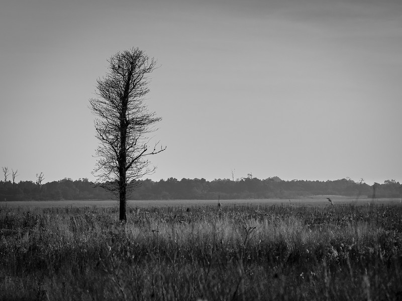 ©2020 Dennis A. Mook; All Rights Reserved; Tree Project-108834.jpg