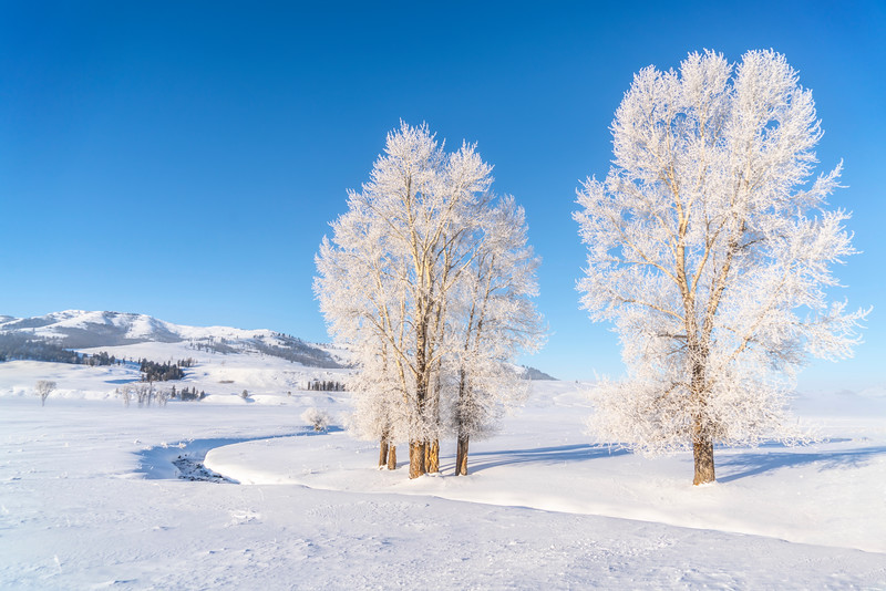 _AR71065 Lamar two frosted trees printable.jpg
