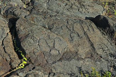 Old Hawaiian petroglyphs