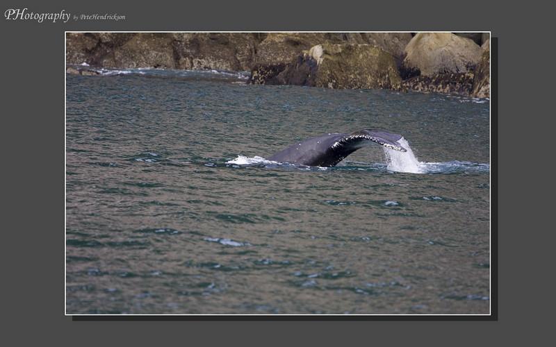 My Alaska 12-08-104.jpg