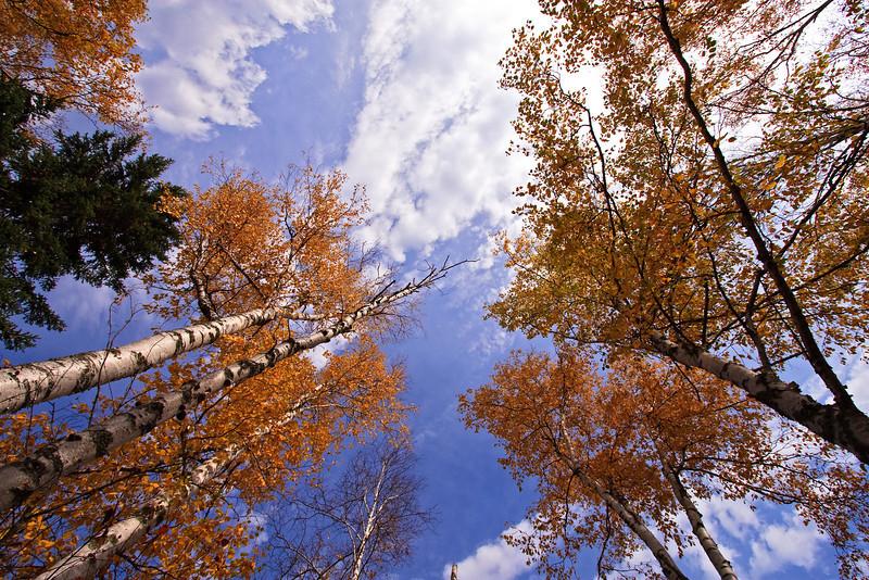 Skyward Fall