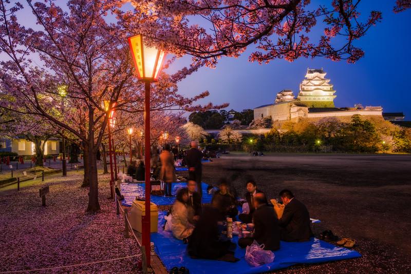 hanami-party-himeji-castle-japan-sakura-cherry-blossom-night-lighting-trees-bricker.jpg