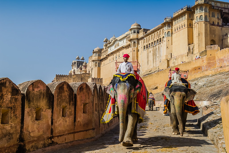 Elephants at the Amer Palace in Jaipur, India