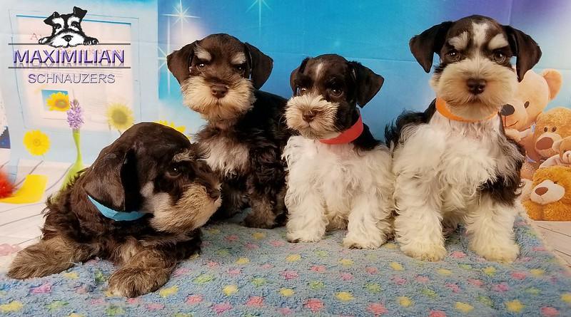 Minnie Pups 021.jpg