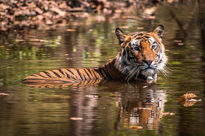 India_April_2019-1148.jpg