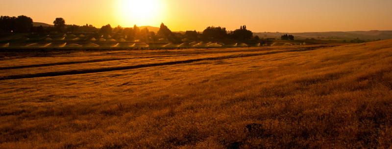 Sunrise Marsing.  Marsing, Id.