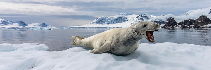 2019_01_Antarktis_03838.jpg