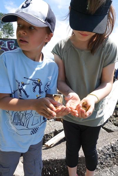 Collecting caterpillars