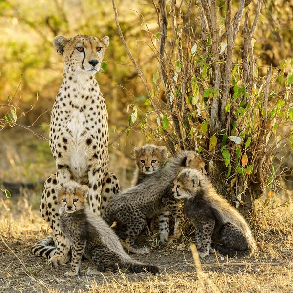 Kenya 2015-06268.jpg