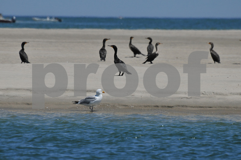 Pictues from cape and father day 139.JPG