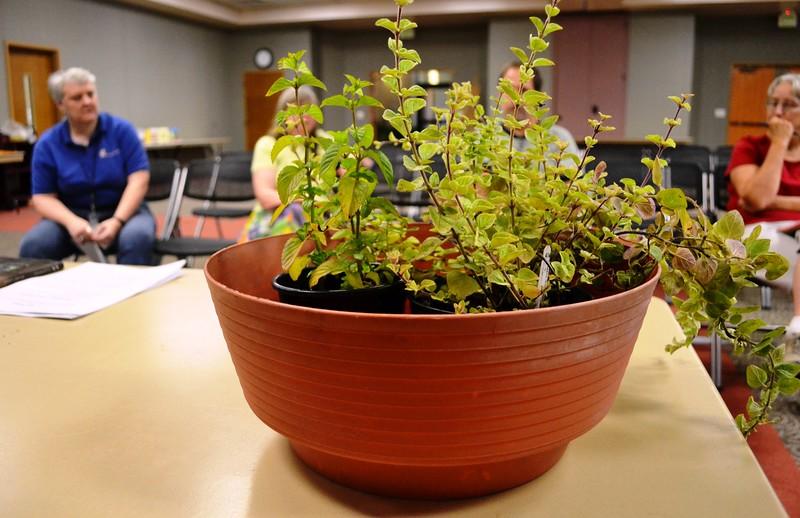 The Fascinating World of Herbs & Herb Swap #6.jpg