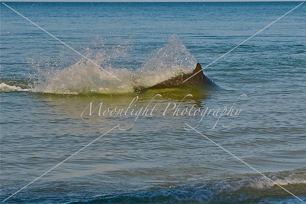 Dolphins & Stingrays