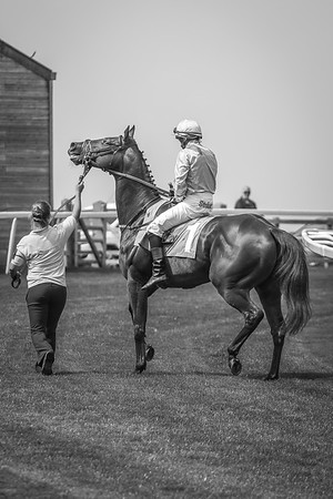 The Journal Ladies Day, Beverley, Wednesday 12th August 2015