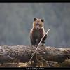 Cub on Collapsed Tree