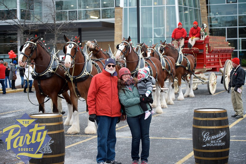 Clydesdale Portraits 60.jpg
