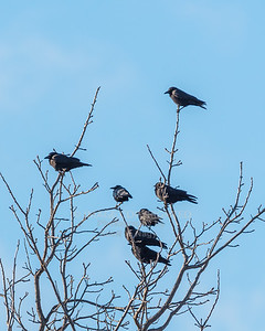 03/16/18 Crows