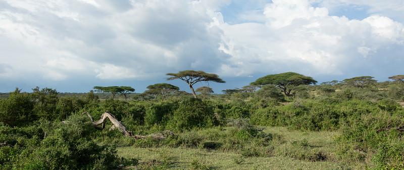 Tanzania_2D4A4766-Edit.jpg