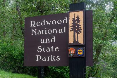 Redwood National Park 2019