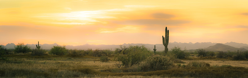 A desert sunset panorama with a saguaro cactus silhouetted against the evening sky in the Sonoran