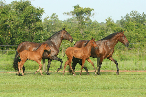 multiple horses together