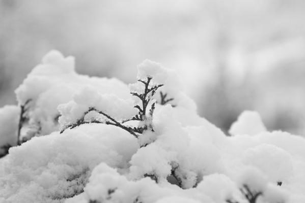 First Snow '09
