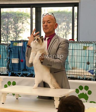 Birman Cat Show May7th