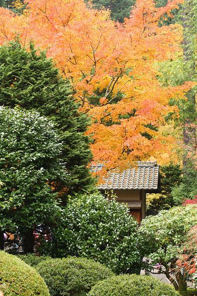 Portland Japanese Garden  11-11-11  3537.jpg
