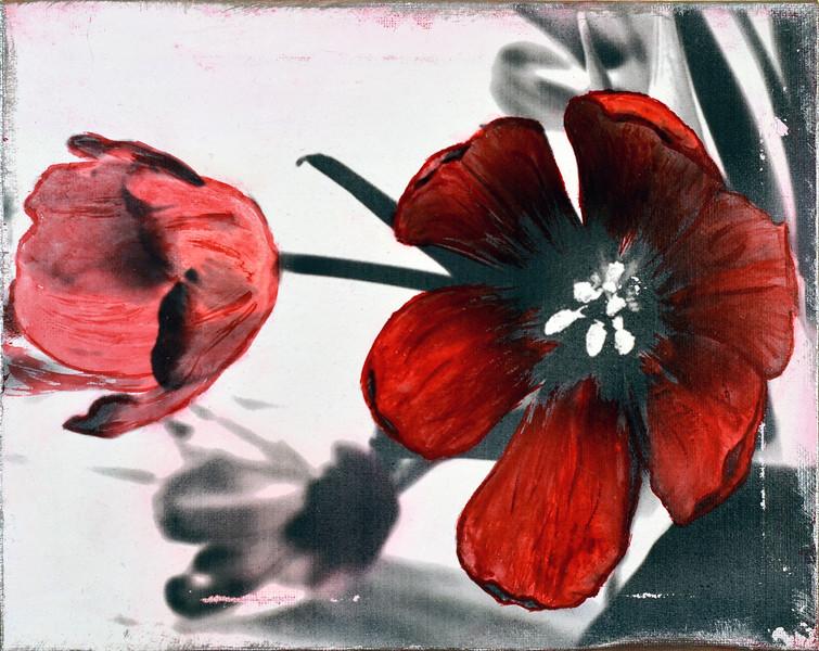 Big Bright Red Tulip