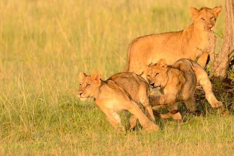 20160215__KET7636_Serengeti_Day_7.jpg