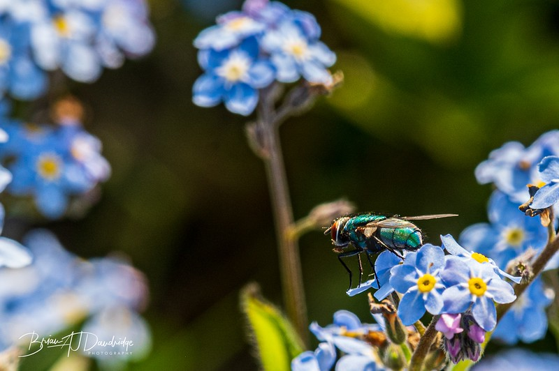 Garden flowers and insects-2557.jpg