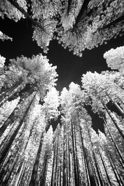 tahoe_563.jpg