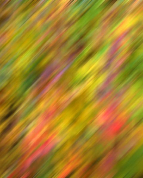 Autumn Streaks.jpg