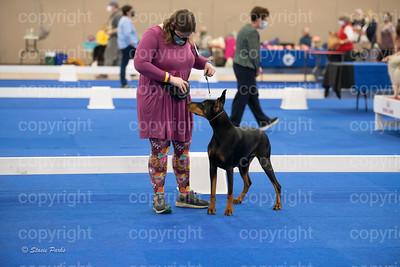 Dayton Kennel Club Puppy Match 2021