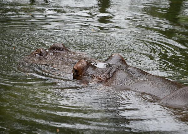 Homosassa Wildlife State Park