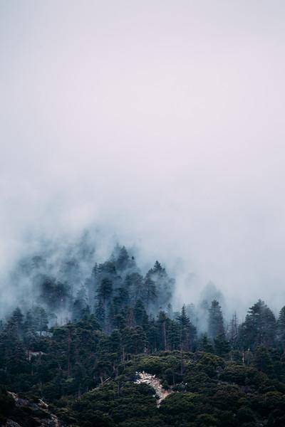 fogfogfog-2-2.jpg